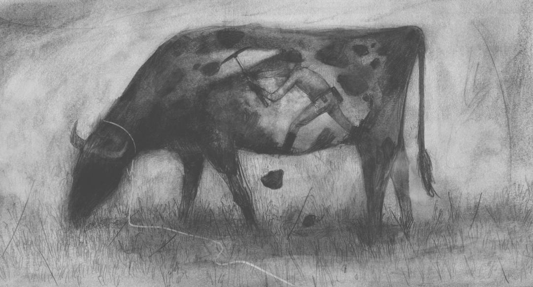 Minería Bovino/ lápiz de grafito y retoque digital/ Ilustración Geison Castañeda